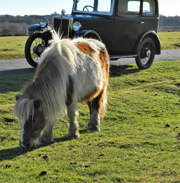 2018 POTY entry no 34 - Nine horsepower in the New Forest?
