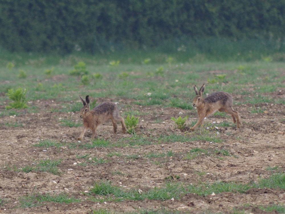 Close encounter - 4th May
