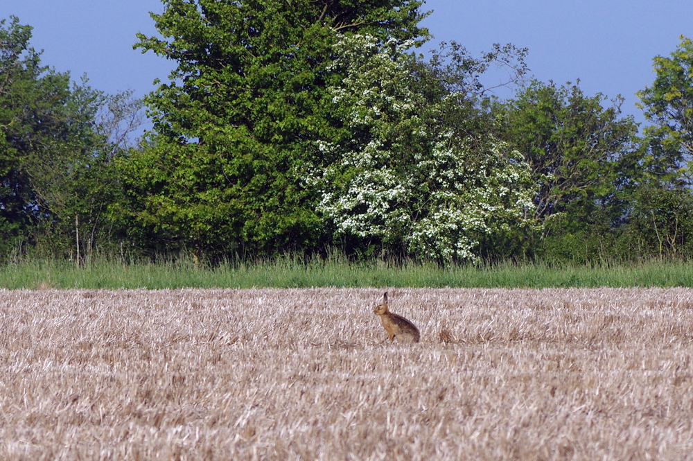 Hawthorn & Hare - May 6th