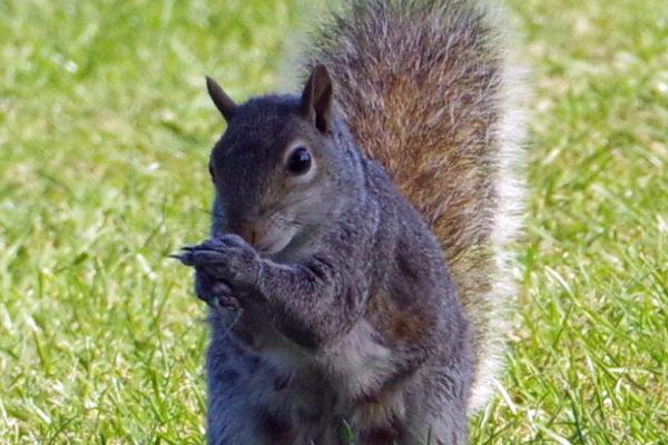 Squirrel 2 25th May