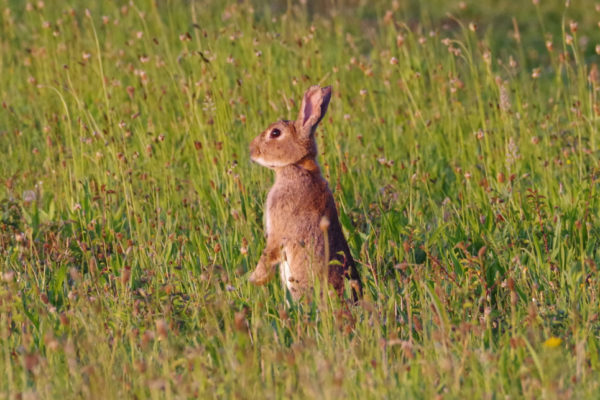 Rabbit PM 24th June ws