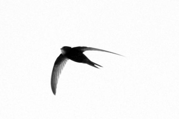 Swift 18th June
